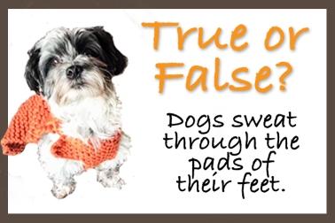 FB SP True or False 1